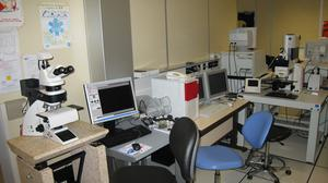 Microscopies optiques