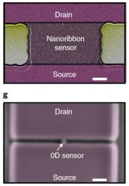 Nanotransistor biosensor